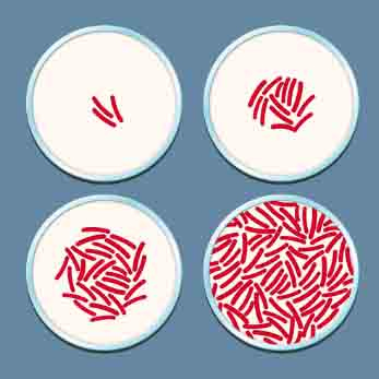kháng kháng sinh là gì